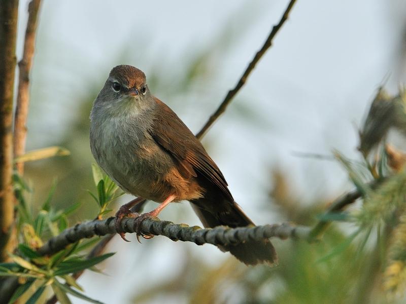 vogels tuin nederland